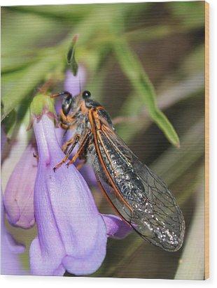 Cicada Wood Print