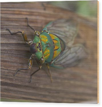 Green Whizzer Cicada Wood Print