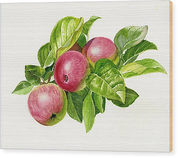 Cider Apples With White Background Wood Print by Sharon Freeman