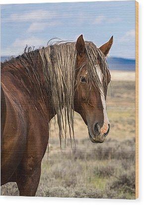 Cimarron - Wild Mustang Stallion Wood Print