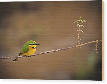 Cinnamon-chested Bee-eater Wood Print by Adam Romanowicz