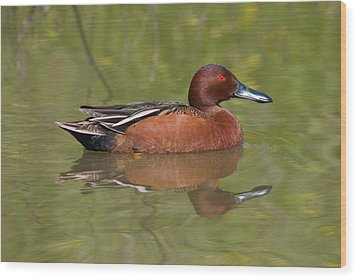 Cinnamon Teal Wood Print
