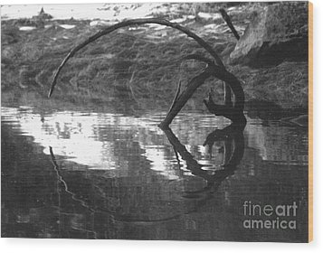 Wood Print featuring the photograph Circle And Heart by Cynthia Lagoudakis
