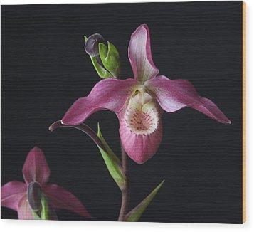Circle Of Life Orchid Wood Print