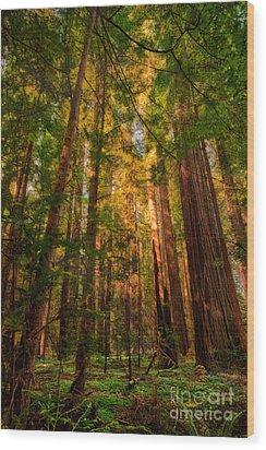 Circle Of Light - California Redwoods Wood Print