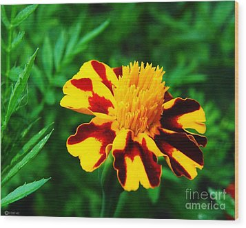 Circus Circus Marigold Wood Print by Lizi Beard-Ward
