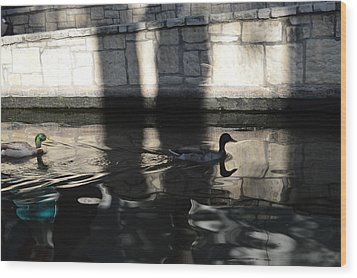 Wood Print featuring the photograph City Ducks by Shawn Marlow