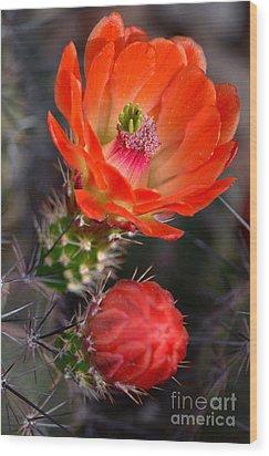 Claret Cup Cactus Wood Print by Deb Halloran