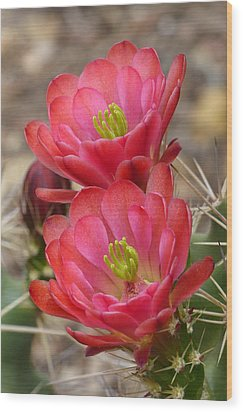 Wood Print featuring the photograph Claret Cup Duo by Cindy McDaniel