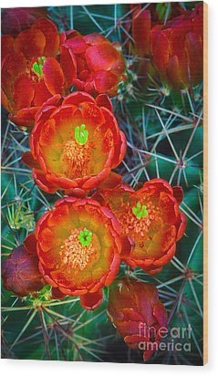 Claret Cup Wood Print by Inge Johnsson