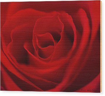 Wood Print featuring the photograph Classic Rose by Kathy Ponce
