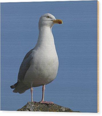 Classical Seagull Wood Print