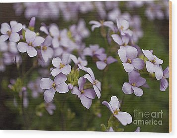 Wood Print featuring the photograph Claude's Aubrieta by Sandi Mikuse