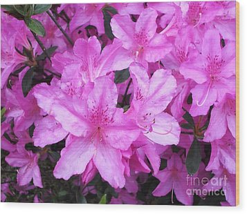 Wood Print featuring the photograph Azaleas by Donna Dixon