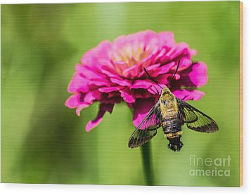 Clearwing Moth Wood Print