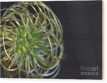 Clematis Close Up Flower Wood Print by Art Photography
