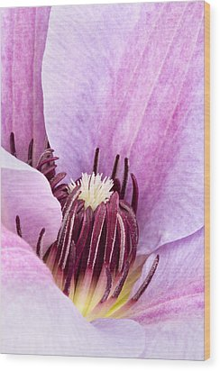 Clematis Close Up Pink Wood Print by Natalie Kinnear