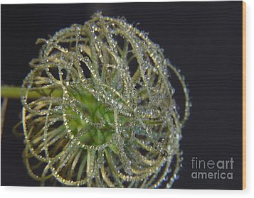 Clematis Close Up With Water Drops Wood Print by Art Photography