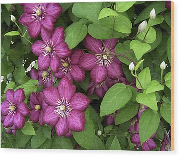 Wood Print featuring the photograph Clematis by Penny Lisowski