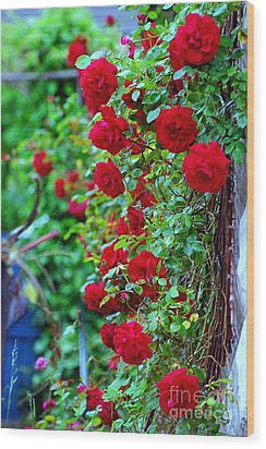 Climbing Red Roses Wood Print by C Lythgo
