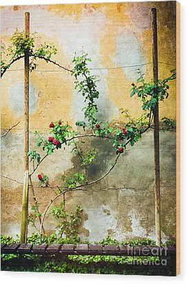 Wood Print featuring the photograph Climbing Rose Plant by Silvia Ganora