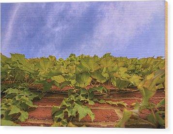 Climbing The Walls - Ivy - Vines - Brick Wall Wood Print by Jason Politte