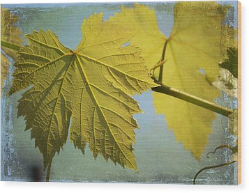 Clinging To The Vine Wood Print by Fraida Gutovich