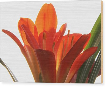 Wood Print featuring the photograph Clivia by Jivko Nakev
