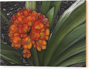 Wood Print featuring the digital art Clivia by Photographic Art by Russel Ray Photos