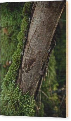 Cloak Wood Print by Odd Jeppesen