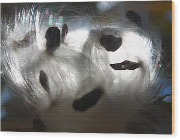 Wood Print featuring the photograph Close Cotton by Alicia Knust