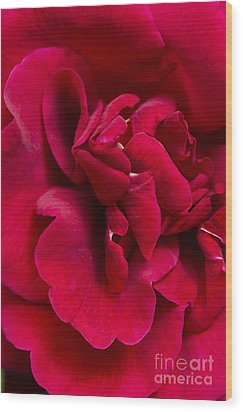 Close Up Of A Bright Red Rose Wood Print
