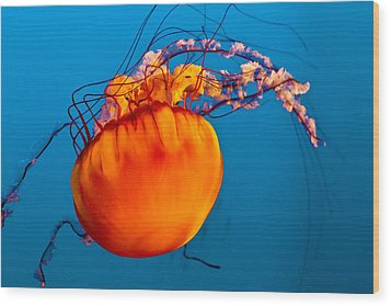 Wood Print featuring the photograph Close Up Of A Sea Nettle Jellyfis by Eti Reid