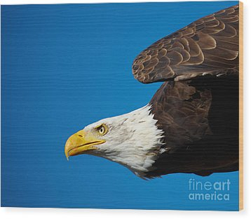 Wood Print featuring the photograph Close-up Of An American Bald Eagle In Flight by Nick  Biemans