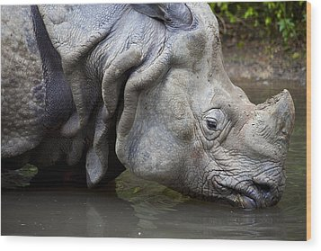 Close Up Of Rhino Drinking Rhinoceros Unicornis Wood Print by Gino De Graaf