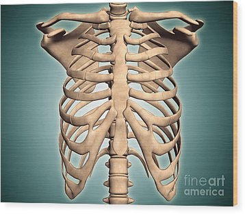 Close-up View Of Human Rib Cage Wood Print by Stocktrek Images
