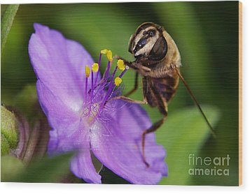 Closeup Of A Bee On A Purple Flower Wood Print