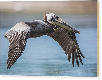 Closeup Of A Flying Brown Pelican Wood Print by Andres Leon
