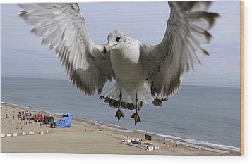 Closeup Of Hovering Seagull Wood Print by Richard Rosenshein