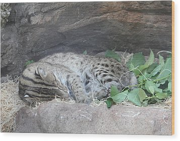 Clouded Leopard - National Zoo - 01131 Wood Print by DC Photographer