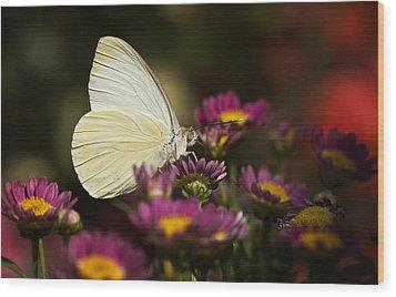 Cloudless Sulphur Butterfly  Wood Print by Saija  Lehtonen