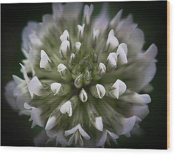 Wood Print featuring the photograph Clover All Over by Annette Hugen