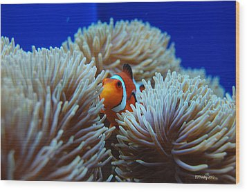 Clown Fish In Sea Anemone Wood Print
