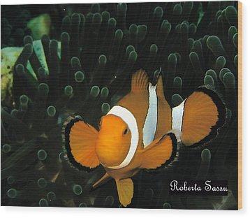 Clown Fish Wood Print by Roberta Sassu