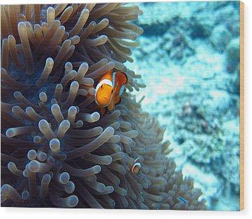 Clownfish Borneo Wood Print by Laura Hiesinger