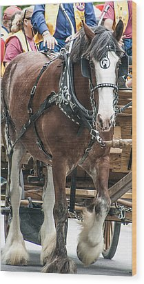 Wood Print featuring the photograph Clydesdale On Parade  by Dawn Romine