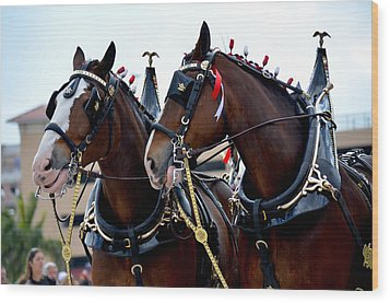 Wood Print featuring the photograph Clydesdales 2 by Amanda Vouglas