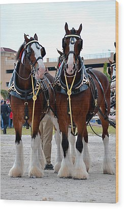 Wood Print featuring the photograph Clydesdales 3 by Amanda Vouglas