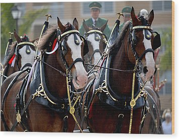 Wood Print featuring the photograph Clydesdales by Amanda Vouglas
