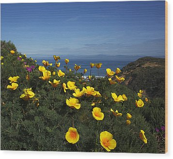 Wood Print featuring the photograph Coastal California Poppies by Susan Rovira
